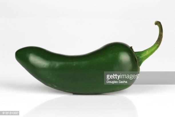 green jalapeno pepper (capsicum annuum) - jalapeno stock-fotos und bilder