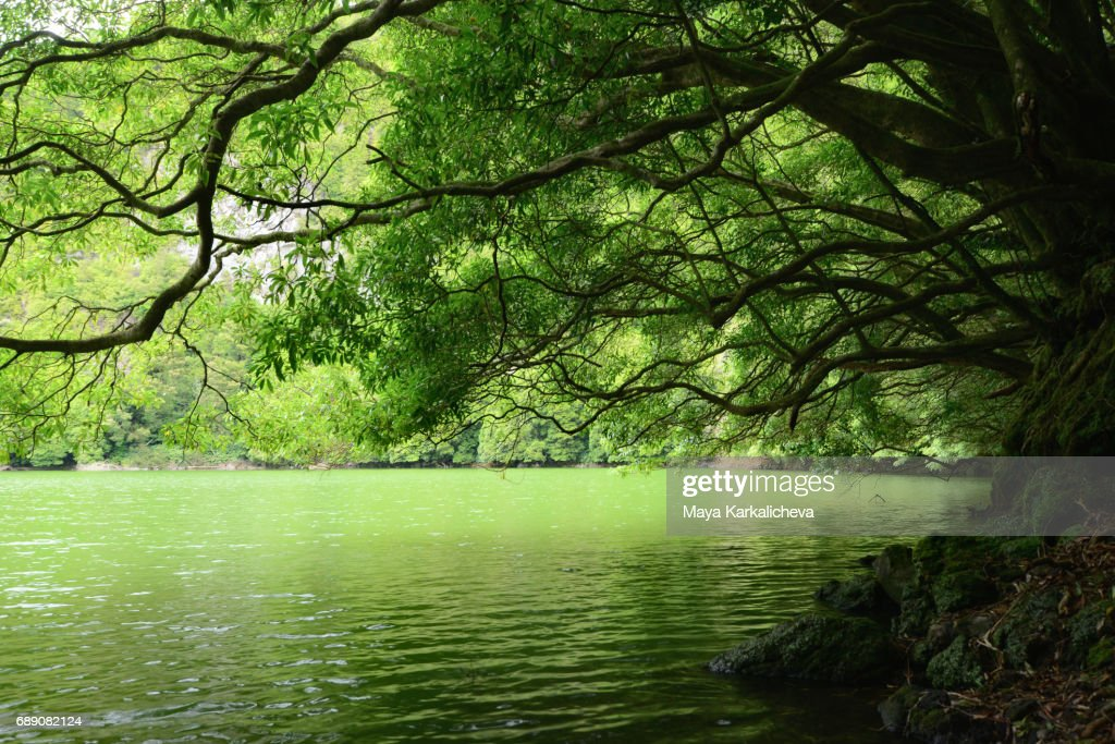 Green lake in the island of Sao Miguel, Azores : Stock Photo