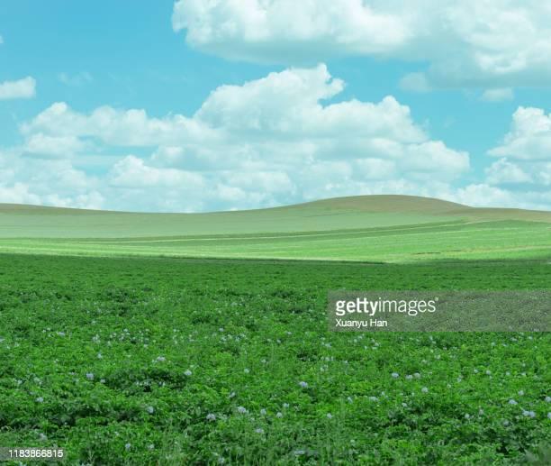 green landscape against sky - 草原 ストックフォトと画像