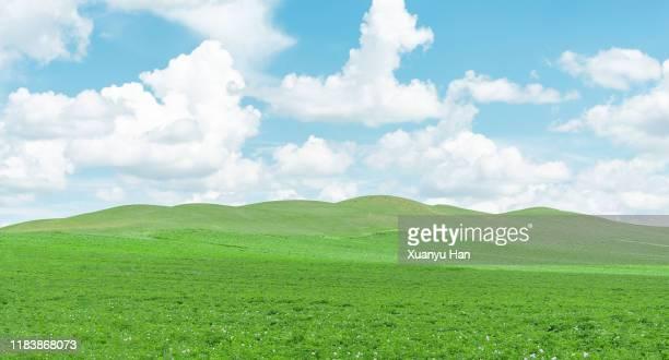 green landscape against sky - terreno coberto de grama - fotografias e filmes do acervo