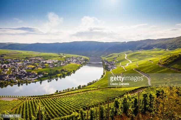 green landscape of mosel valley - ラインラント=プファルツ州 ストックフォトと画像