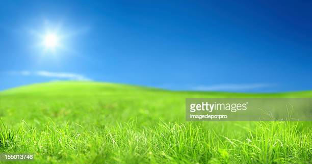 Paysage vert sur ciel ensoleillé