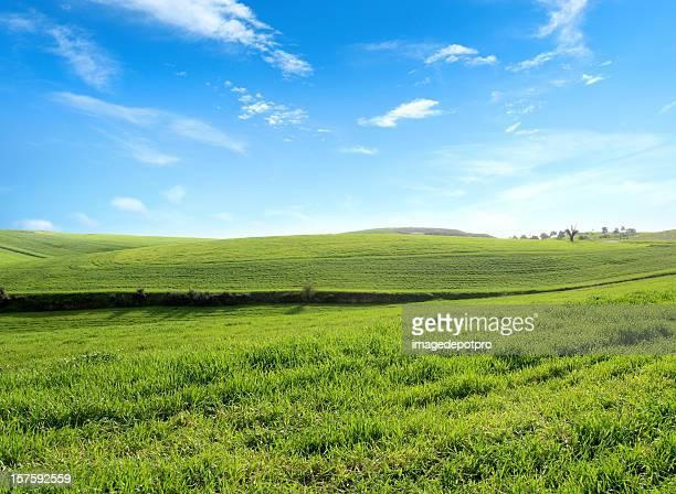 緑の風景 - 休耕田 ストックフォトと画像