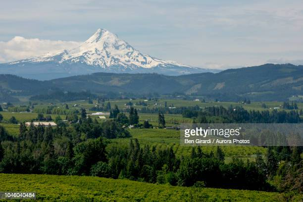 green landscape with snowcapped¬ýmount hood volcano in background, hood river, oregon, united states - hood river stock pictures, royalty-free photos & images