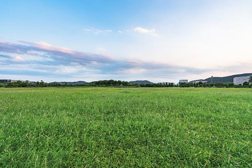 green lawn against sky - gettyimageskorea