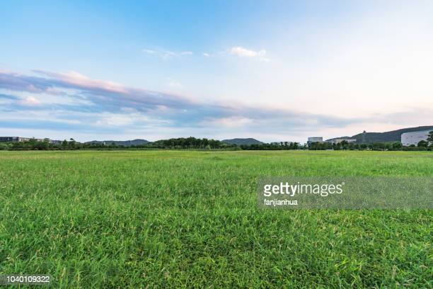 green lawn against sky - grass stock pictures, royalty-free photos & images