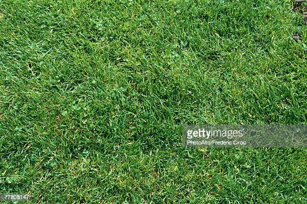 green lawn, full frame - grass stock pictures, royalty-free photos & images