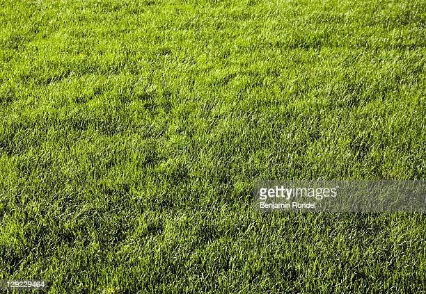 green lawn - gras stock pictures, royalty-free photos & images