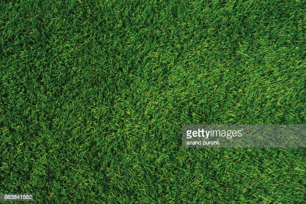 green lawn texture, green grass background - pelouse photos et images de collection