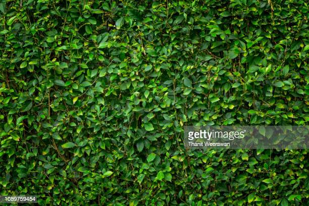 green leaf background - lush foliage stock pictures, royalty-free photos & images