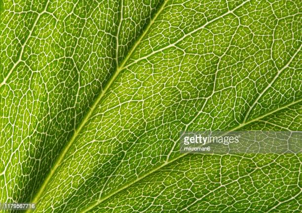 green leaf close up - textured stock pictures, royalty-free photos & images