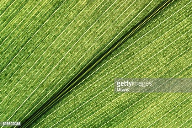 green leaf detail shot - green leafy vegetables stock pictures, royalty-free photos & images