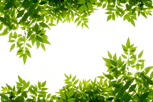 green leaf frame isolate on white background 845962030