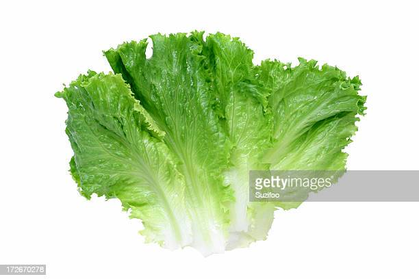 green leaf lettuce - leaf lettuce stock pictures, royalty-free photos & images