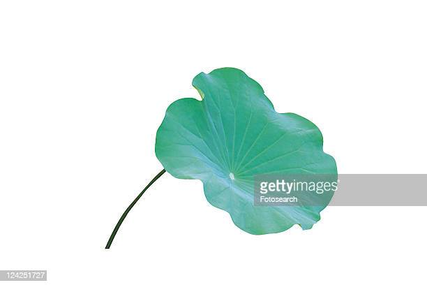 Green, Leaf, Lily Pad, Cut Out