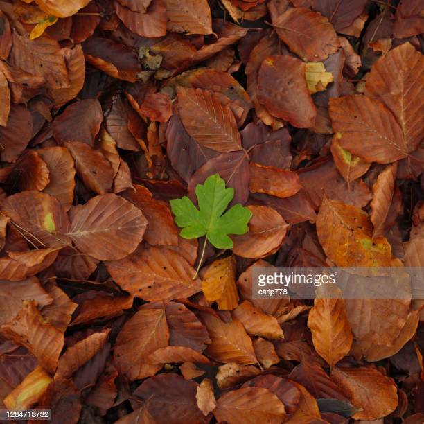 green leaf on top of brown leaves - brown stock pictures, royalty-free photos & images