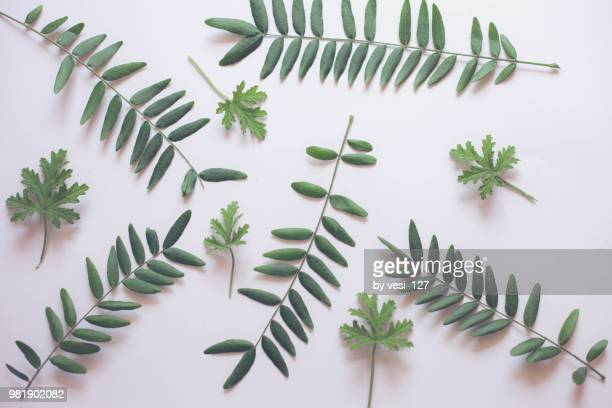 green leaf on white background wallpaper flat lay - clean beauty stock pictures, royalty-free photos & images
