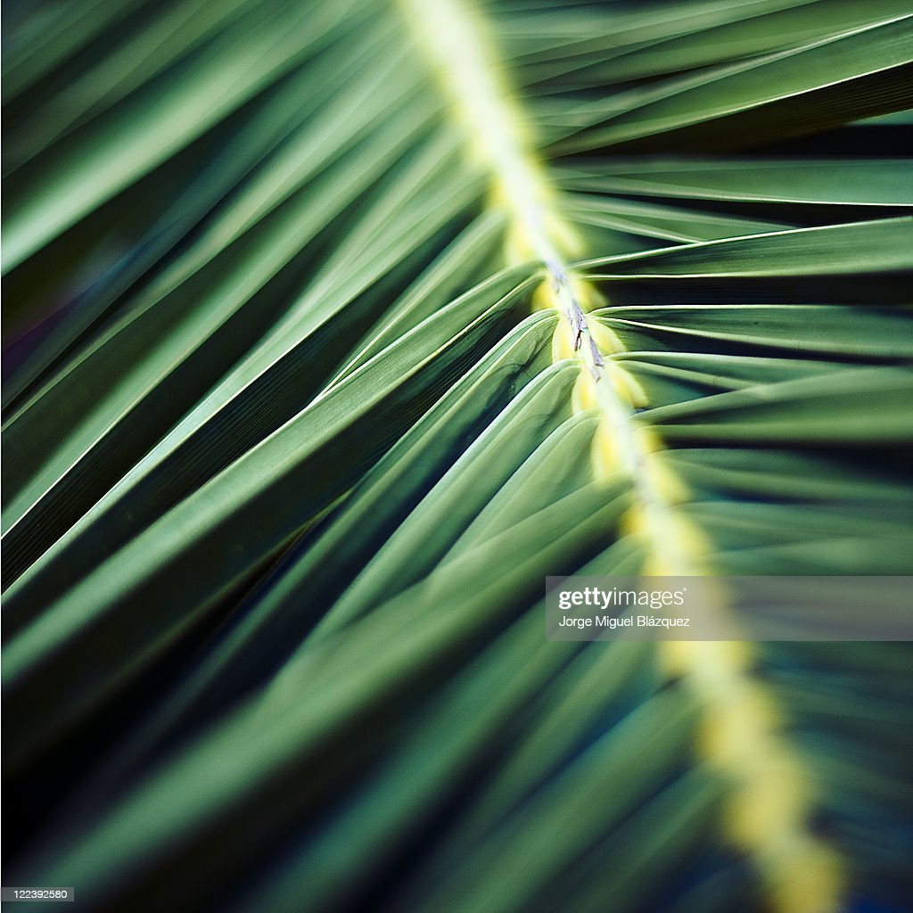 Green leaf : Foto de stock