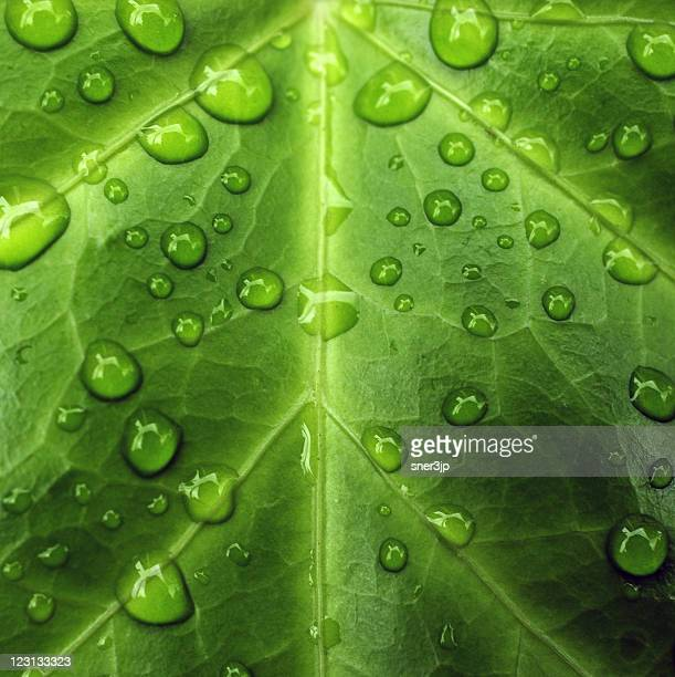 green leaf - dew stock photos and pictures