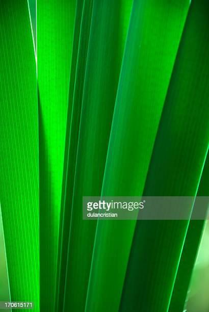 verde leaf - folhagem viçosa - fotografias e filmes do acervo
