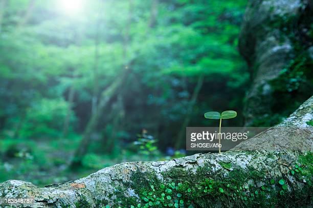 green leaf - 苗 ストックフォトと画像