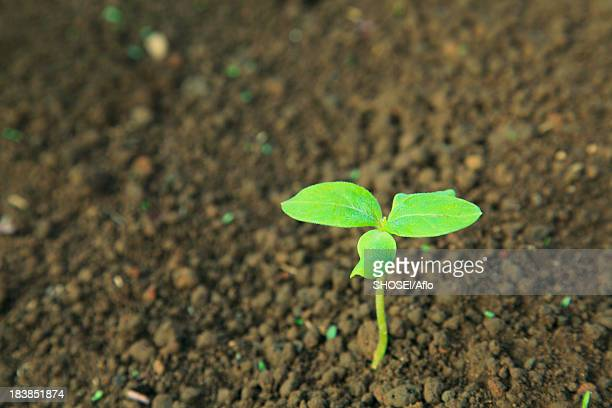 Green leaf sprouting from the ground