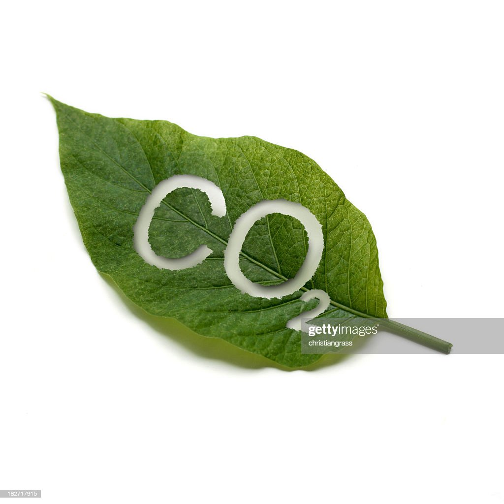 A green leaf with co2 written on it : Stock Photo