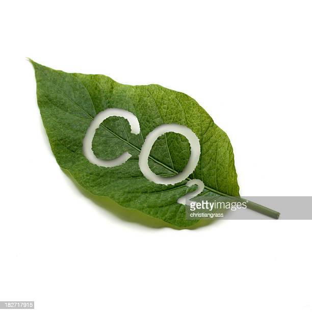 a green leaf with co2 written on it - photosynthesis stock photos and pictures