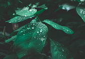 Green leaf with dew on dark nature background.