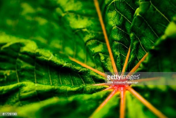 Green leaf with red center