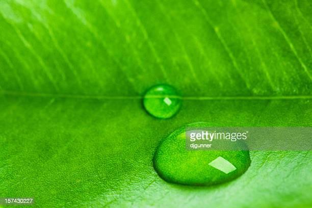 Grünes Blatt mit Wasser Makro