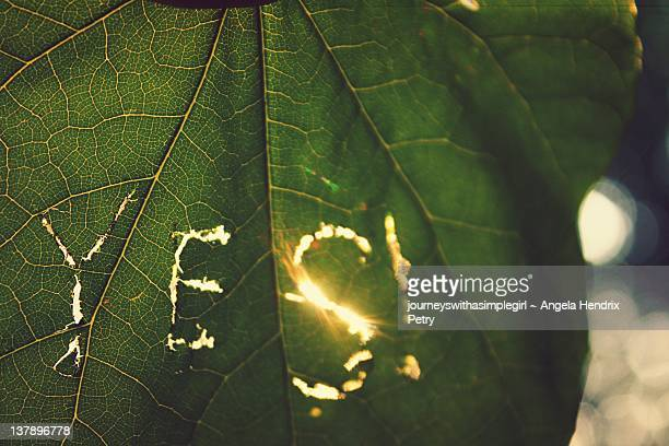 green leaf with word yes - bloomington indiana stock photos and pictures