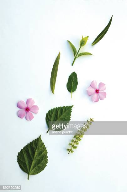Green leafs & flowers on white background