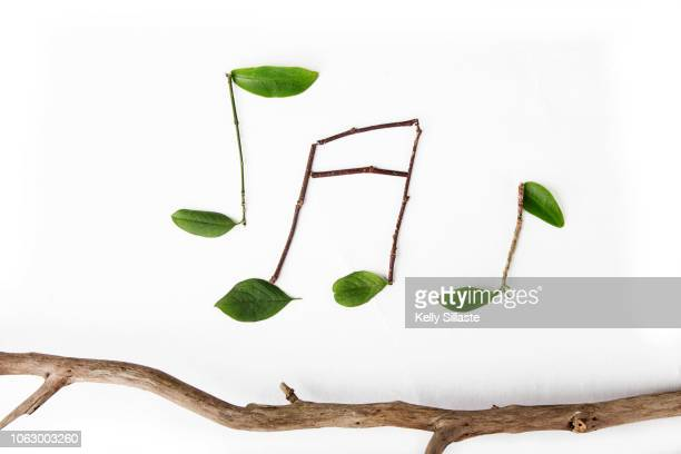 green leafy musical notes - note de musique photos et images de collection