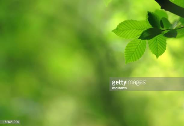 Hojas de fondo verde
