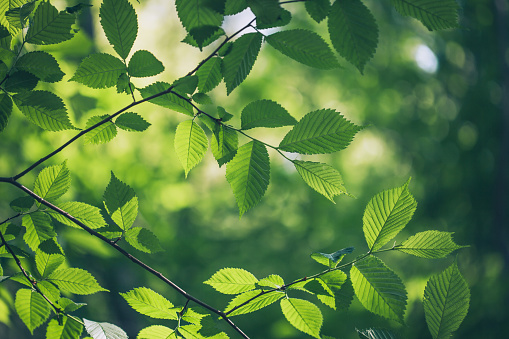 Green leaves background 668288668