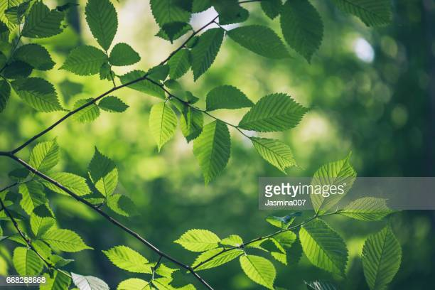 green leaves background - meio ambiente imagens e fotografias de stock