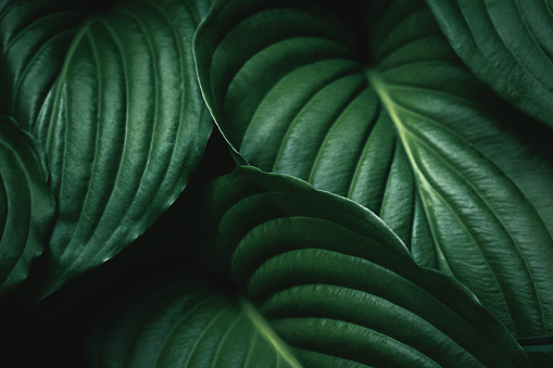 Green Leaves Background 668592606
