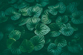 http://www.istockphoto.com/photo/green-leaves-background-gm855070690-140736151
