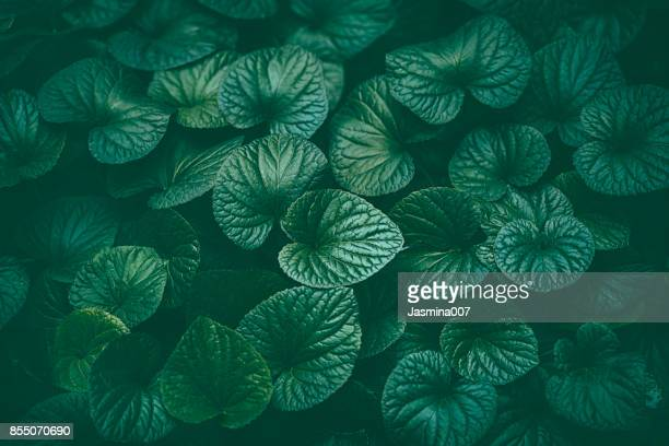green leaves background - lush foliage stock pictures, royalty-free photos & images