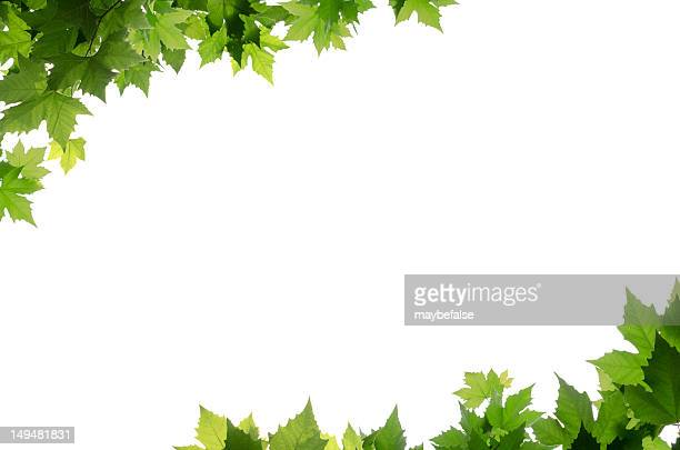 Green leaves bordering corners of white background