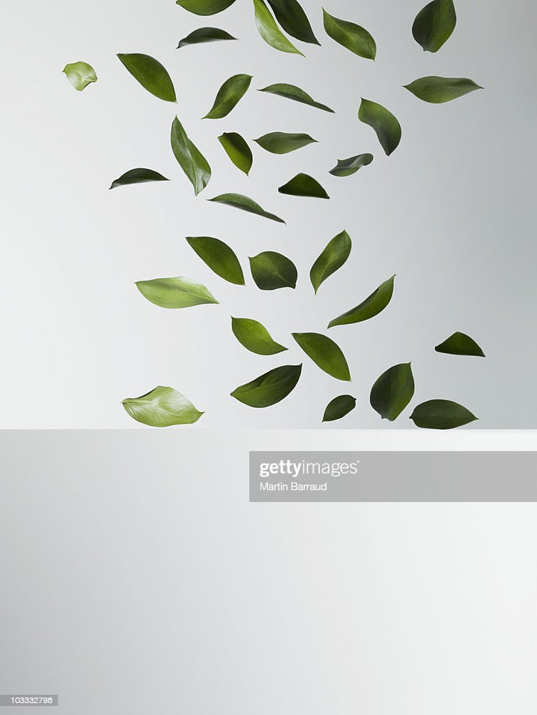 Green leaves falling : Stock Photo