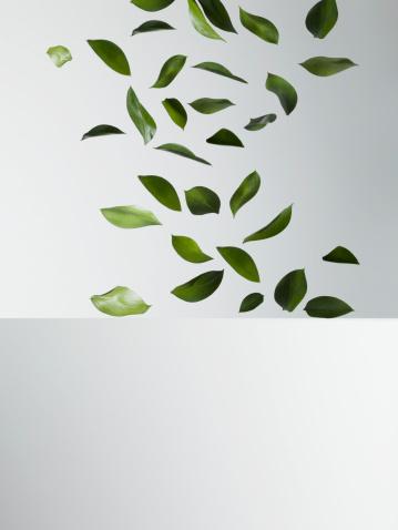 Green leaves falling - gettyimageskorea