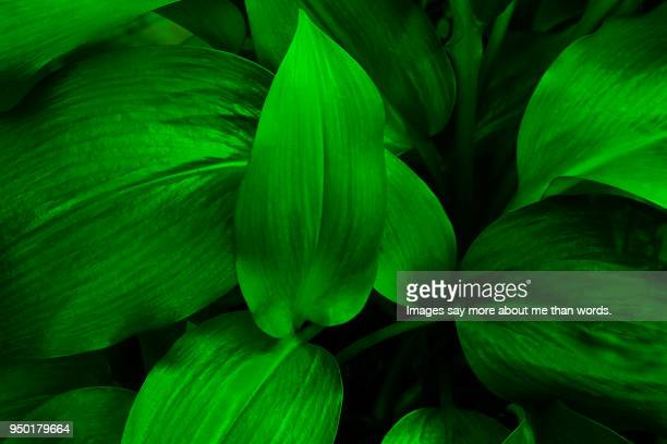 Green leaves forming a beautiful pattern in springtime. Close up
