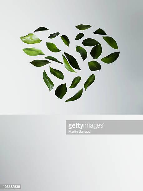 green leaves forming heart-shape - hovering stock pictures, royalty-free photos & images