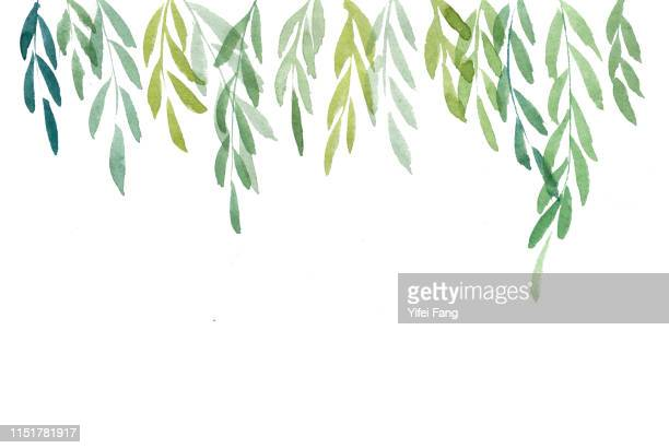 green leaves hanging down from top - lush stock pictures, royalty-free photos & images