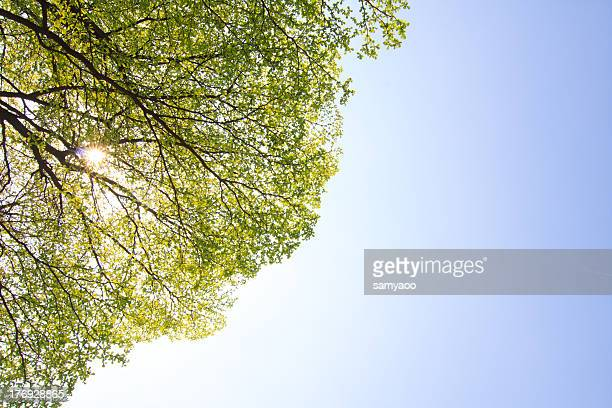 Green leaves in blue sky