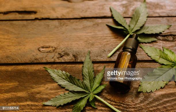 green leaves of medicinal cannabis with extract oil - cannabis plant stock photos and pictures