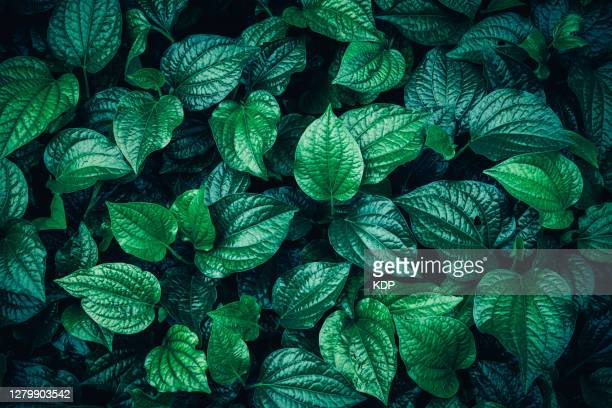 green leaves pattern background, natural lush foliages of leaf texture backgrounds. - leaf stock pictures, royalty-free photos & images