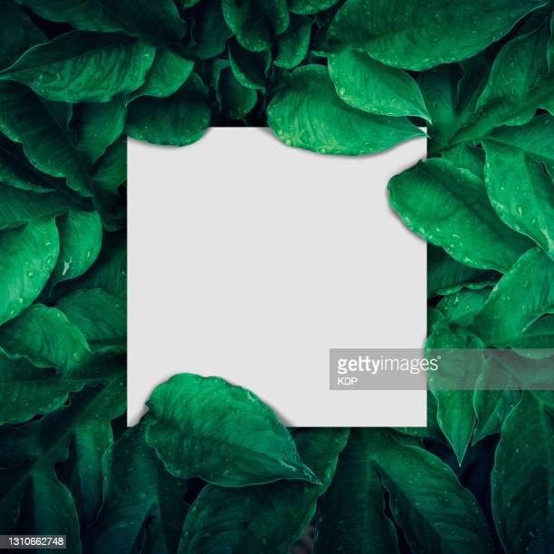 green leaves pattern background with paper frame border, natural lush foliage plant of leaf texture backgrounds. - leaf stock pictures, royalty-free photos & images